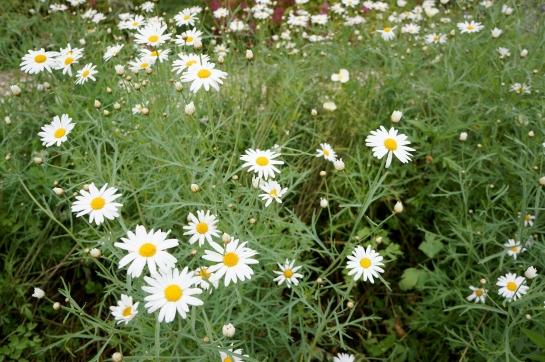 monet garden giverny 16