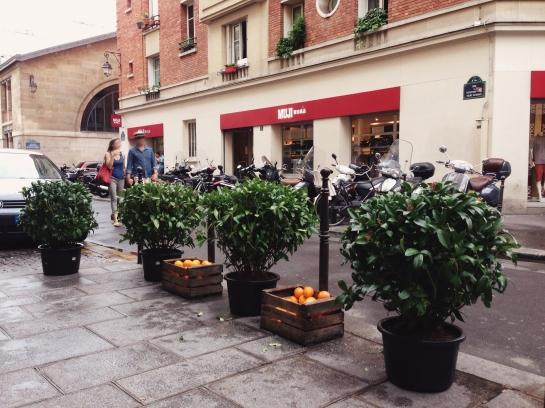 le_marais14_orange_tree
