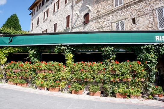 assisi_flower_restaurant_cafe_03