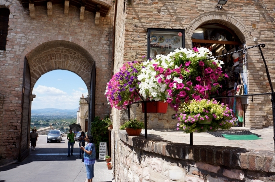 assisi_flower_san_francesco_01