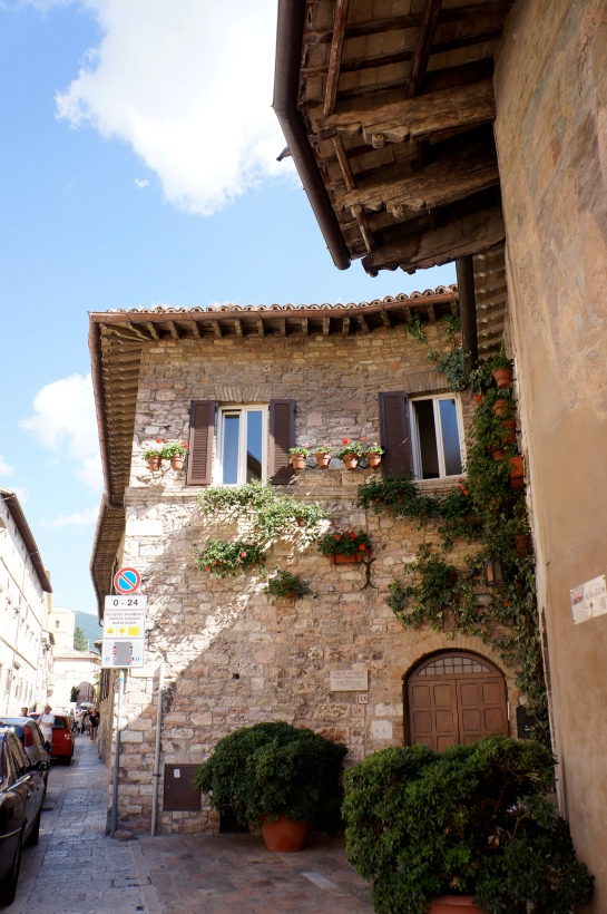 assisi_flower_street_italy_14